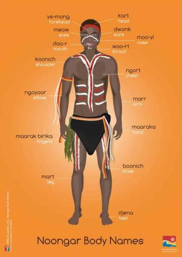 El cuerpo humano explicado en palabras del idioma Noongar