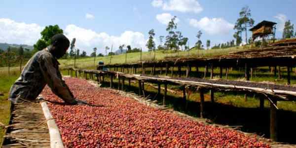 Imparare l'amarico: Cafe Etiopia
