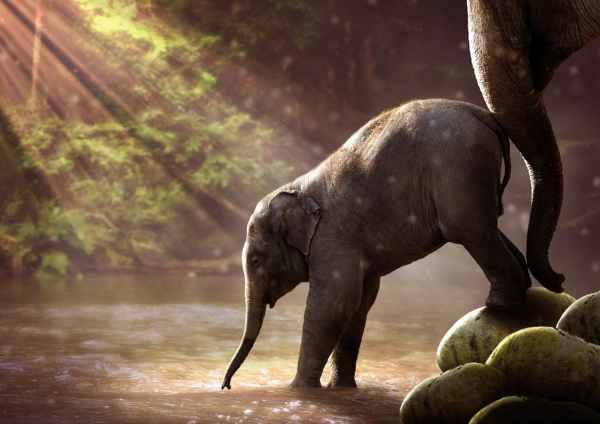 Lenguaje de madre e hijo de elefante
