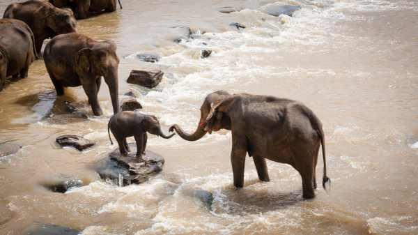 Elefantes hablan entre ellos
