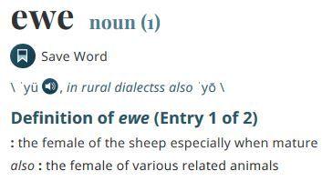 Merriam Webster, for FCE Speaking
