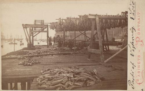 Puerto de Vardo, 1881.