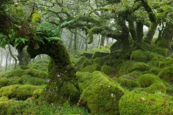 Foresta di Dartmoor, in cui ascolteremmo l'entese